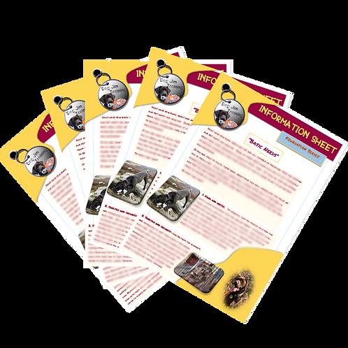 Information Sheet - Foundation Series - Basic Needs