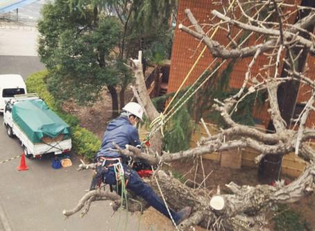 高木の剪定・枝下ろし・伐採