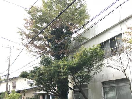 庭木の剪定@大磯町