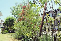 横須賀市湘南国際村のお庭