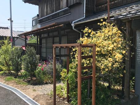 葡萄棚とトレリス @横須賀市