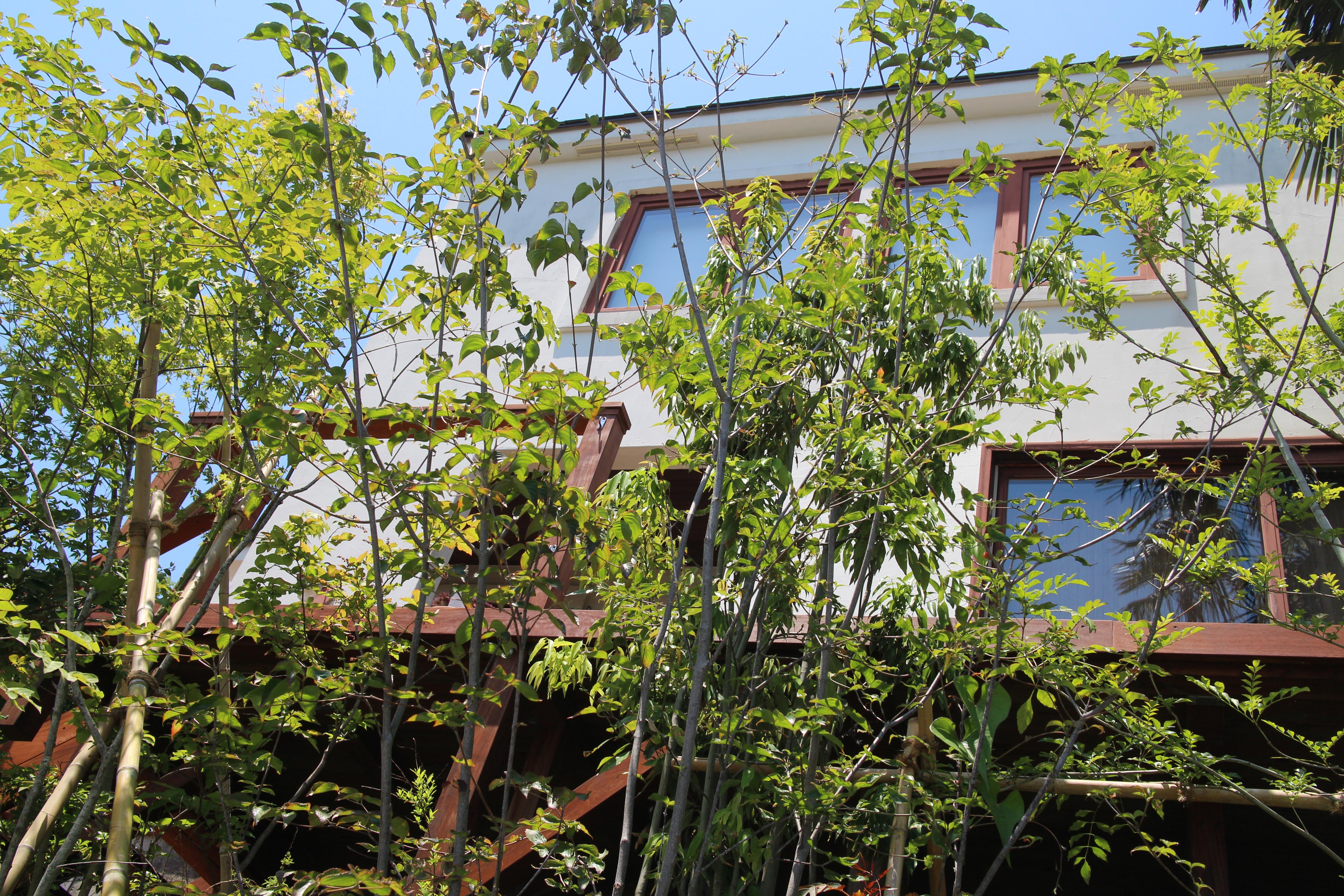 大磯のお庭