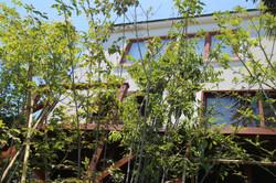 大磯町 雑木のお庭