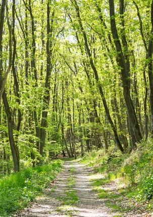 Wanderweg_1.jpg