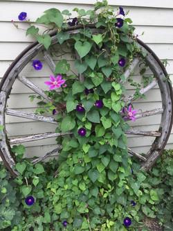 Old wagon wheel.