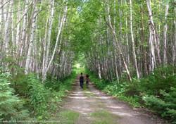 Walking trails.