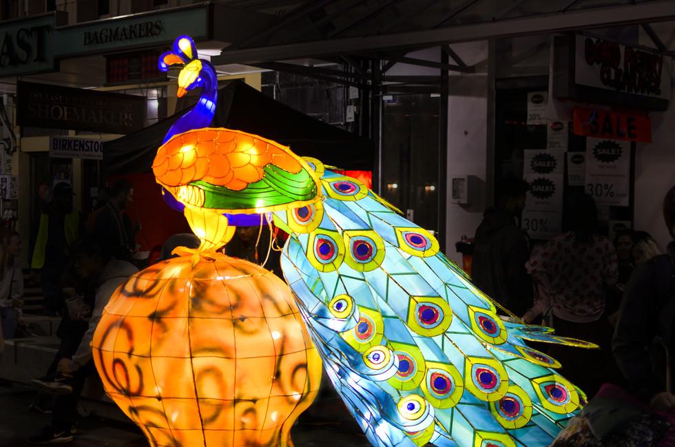 peacock retouch.jpg