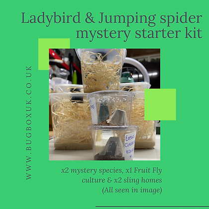 Ladybird & Jumping Spider Mystery Box