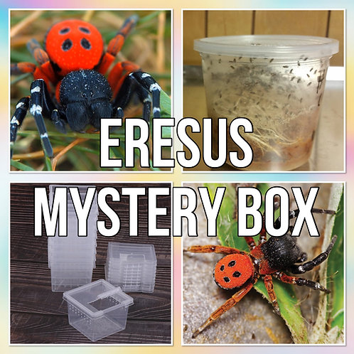 Ladybird Spider Mystery Box