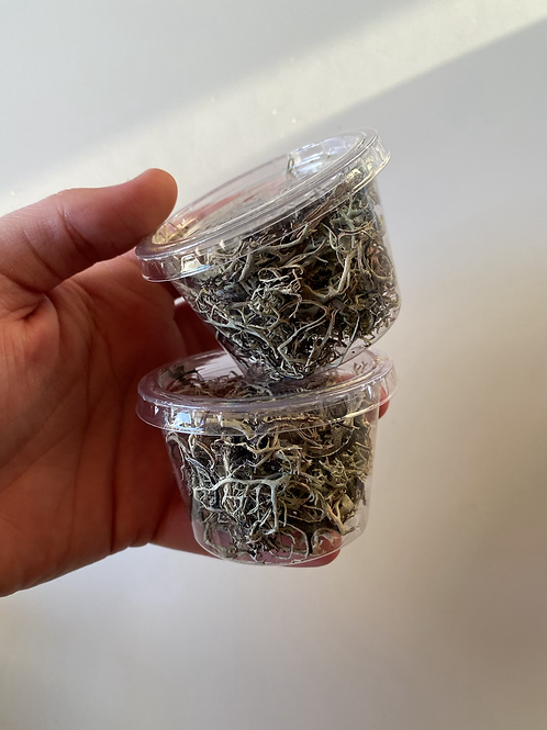 Small lichen pots - Handpicked from Wales 🏴