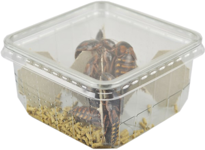 ROACH TUB NO BACKGROUND.png