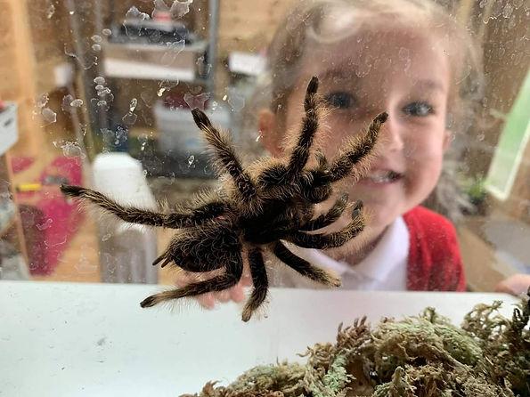 Mali with Bug Box UK Spider.JPG