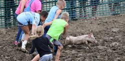 Pig Scramble