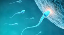 Acupuncture for IVF Support
