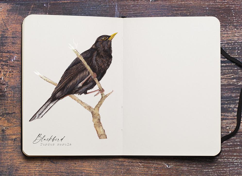 BlackBird PLAIN PAGE.png