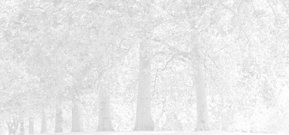 Park%20Trees_edited.jpg