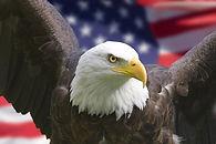 Patriotic eagle an flag