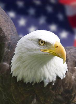 America: It's Just Like Us!