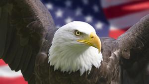 America The Beautiful- My Favorite Travel Destinations