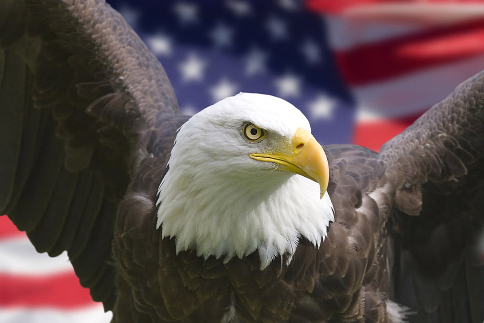 An American Eagle with the American Flag flying behind it