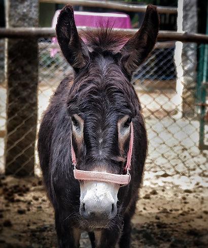 freekie Donkey.jpeg
