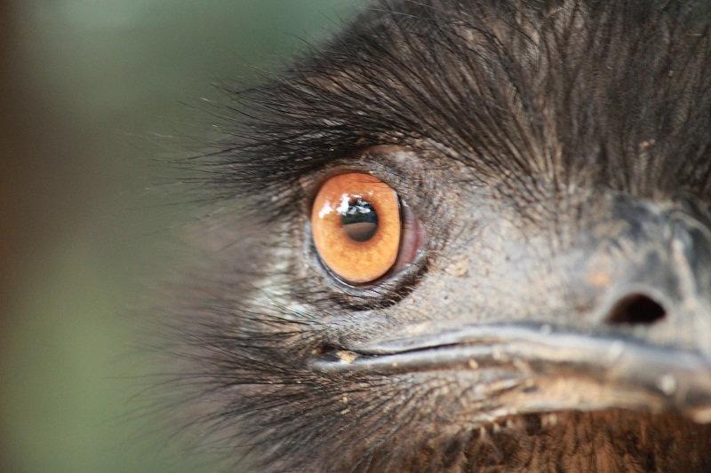 Emu.jpeg