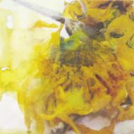 sunflowers 06