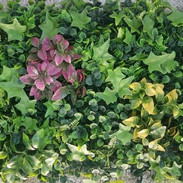 Mix Leaves With Pink And Yellow Flowers