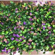 Green and Purple Leaves (Indoor).JPG