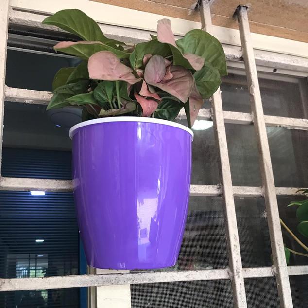 K 5 Violet.jpg