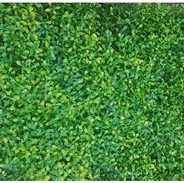 Small Green and Yellow Leaves tile (Indo