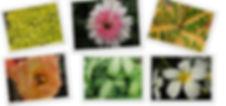 Best Plant  Nursery in Pune Mumbai India Maharashtra