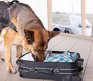 Dog at airport.jpg