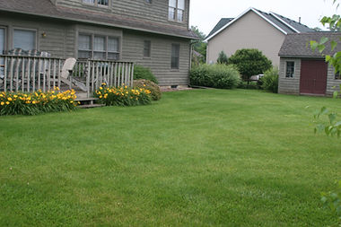 Healthy yard after overseeding