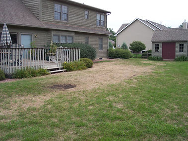 Yard before oveseeding