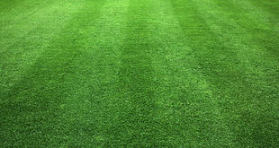 high quality turf