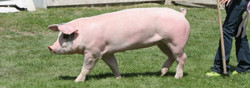 Farm Fresh, Natural Nebraska Pork!