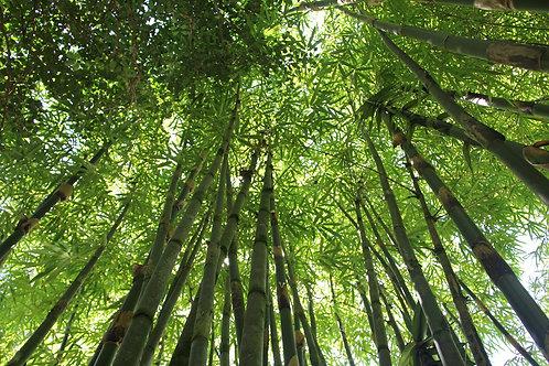 Bamboo Sheet Sets