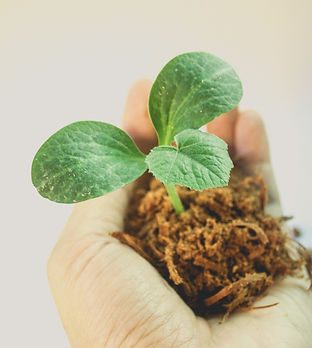 Canva - Person Holding Green Leafed Plan