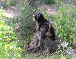 A favorite tree stump.