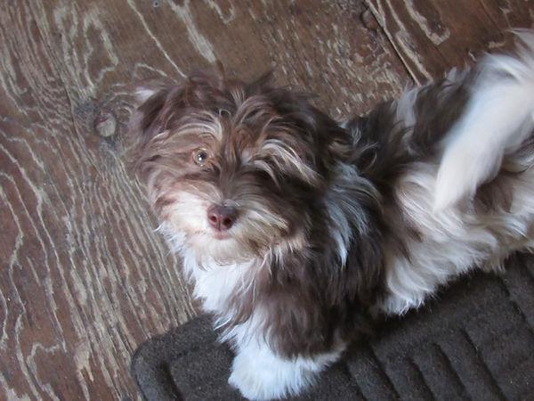 Lizzie- 3 1/2 months old.
