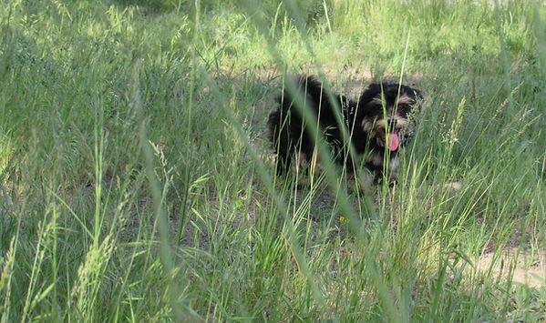 Shiloh in the grass