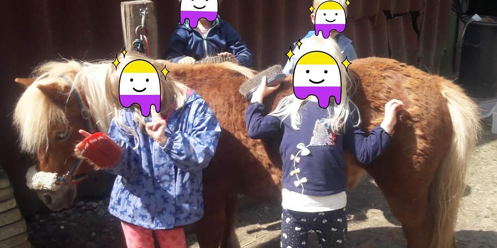 Pony-ABC für Kinder von 5-8 Jahre