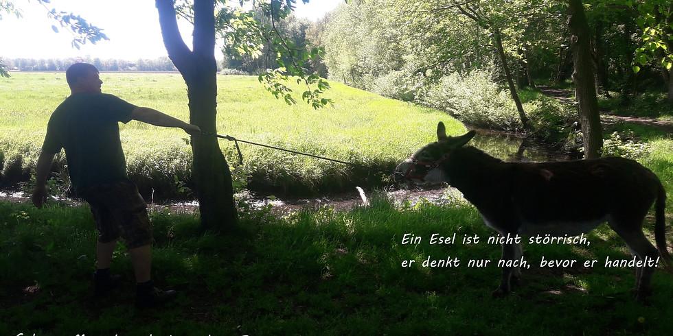 Esel-Wanderung am 14.11.2020