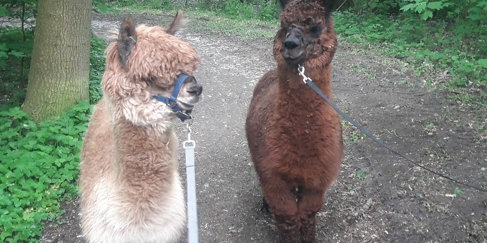 Lama- und Alpaka 1x1 mit Spaziergang WARTELISTE