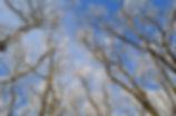 Devinska kobyla .jpg