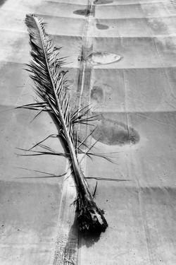 Palm Dead