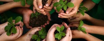 group of children's hands holding seedlings