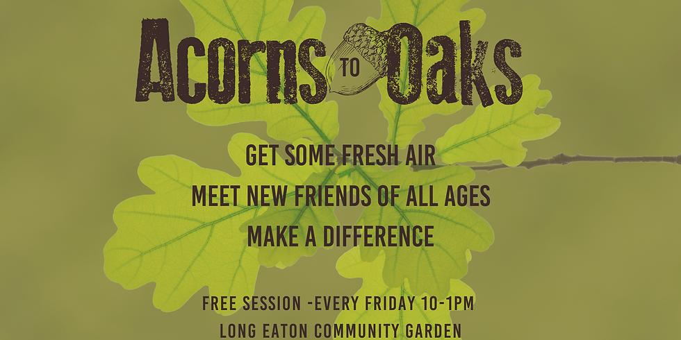 Summertime Acorns To Oaks - 16th August