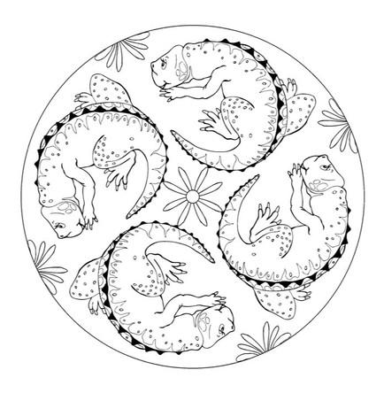 Dinosaurus mandalaer